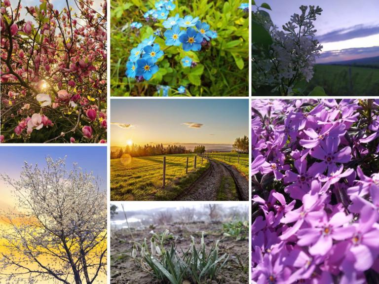 Wiosenne fotografowanie