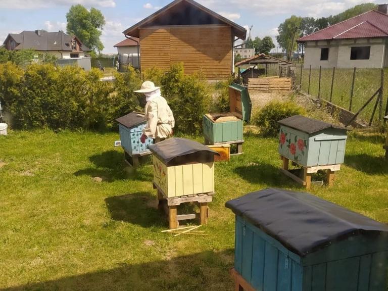 Światowy Dzień Pszczół w Kwidzynie